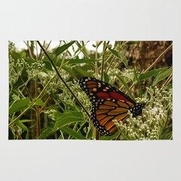 Feeding butterfly Rug
