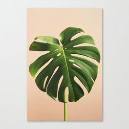 Vedure #8 Canvas Print