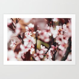 Blooming Blossom Detail Art Print
