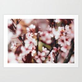 Blooming Blossom Detail Art Print
