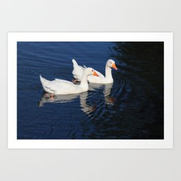 Two Emden Geese Art Print
