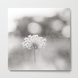 "Black and White Nature Photography, Queen Anne's Lace Grey Photo, Floral Print, ""Dreamy"" Metal Print"