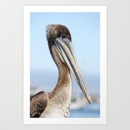 proud pelican Art Print