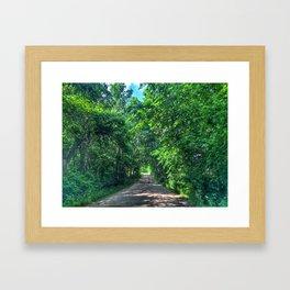 Tree Tunnel  Framed Art Print
