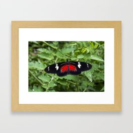 Black and Red Butterfly - Insect Photography Framed Art Print