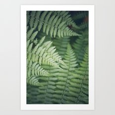 Where the Redwood Fern Grows Art Print