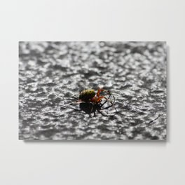Marbled Orb Weaver Metal Print