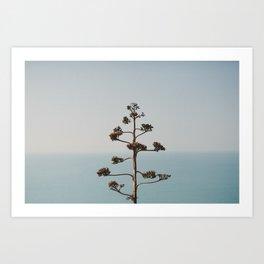 A plant. Art Print