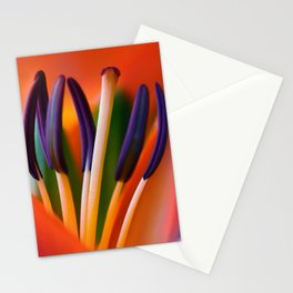 Lily 11 Stationery Cards