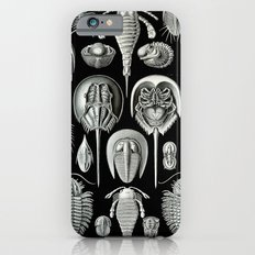 Trilobites and Fossils by Ernst Haeckel iPhone 6 Slim Case