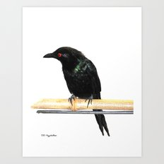Fork-tailed Drongo Art Print