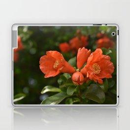 Pomegranate in bloom Laptop & iPad Skin