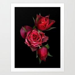 Carmine Roses Art Print