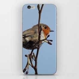 Beautiful robin iPhone Skin