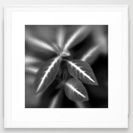 Botanica Obscura #7 Framed Art Print