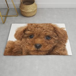 Little Brown Toy Poodle Rug