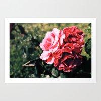 Flowers/ Rome Art Print