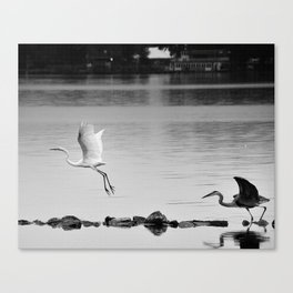 Stay, My Fair Egret ! Canvas Print