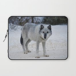 Lone wolf of the Canadian Rocky Mountains Laptop Sleeve