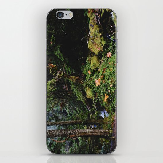 Late Fall Forest iPhone & iPod Skin