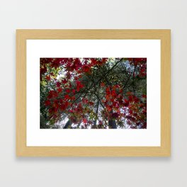 Beautiful Trees / 18 Framed Art Print