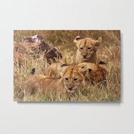 Lion Cubs Metal Print