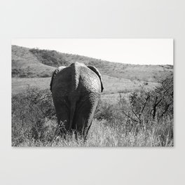 Elephant in Africa Canvas Print
