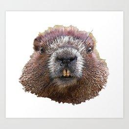 Beaver Face Big White Teeth Looking You Mammal Art Print