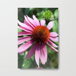 Purple Conflower Metal Print