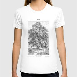 Linden Tree Print from 1800's Encyclopedia T-shirt