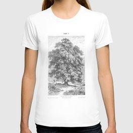 Linden Tree Print from 1800's Encyclopedia T-shirt