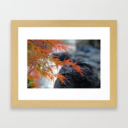 Japanese Maple and Waterfall in Autumn Garden Photography Framed Art Print