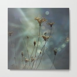 Queen Anne's Lace on Bokeh Background Metal Print