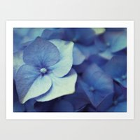 hydrangea Art Prints featuring Hydrangea by Anne Staub
