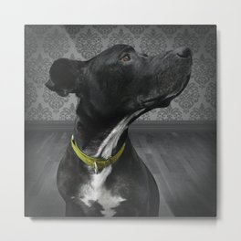COBY (shelter pup) Metal Print