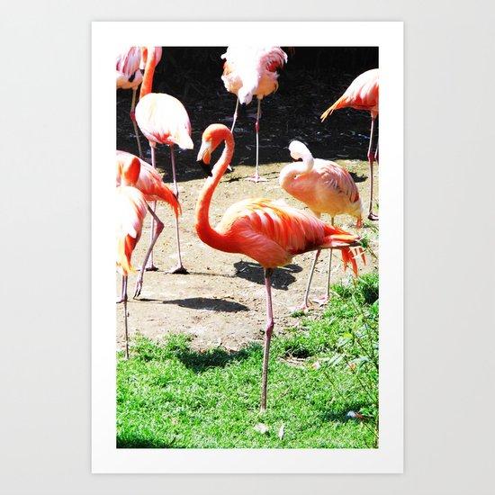 THE DANCE OF THE FLAMINGOS Art Print