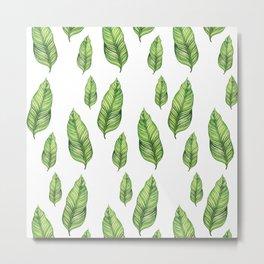 The banana tree leaf Metal Print