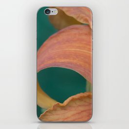 Orange Daylily aka Tiger Lily iPhone Skin