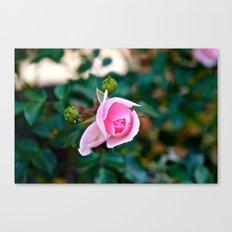 Pink Kiss Canvas Print