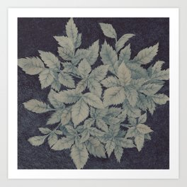 Roses plant Art Print