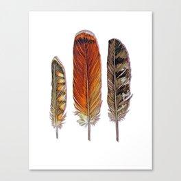 Raptor Feathers Canvas Print