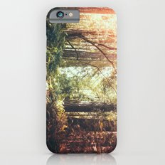 Beautiful California Redwoods Slim Case iPhone 6s