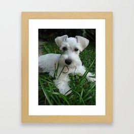 Little Jimmy Framed Art Print