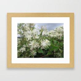 White summer flowers Framed Art Print