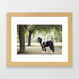 Majestic Horse in Color Framed Art Print
