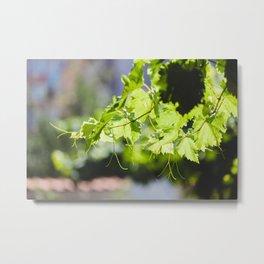 Bulgarian Grapevine #society6 #decor #buyart #kirovair Metal Print