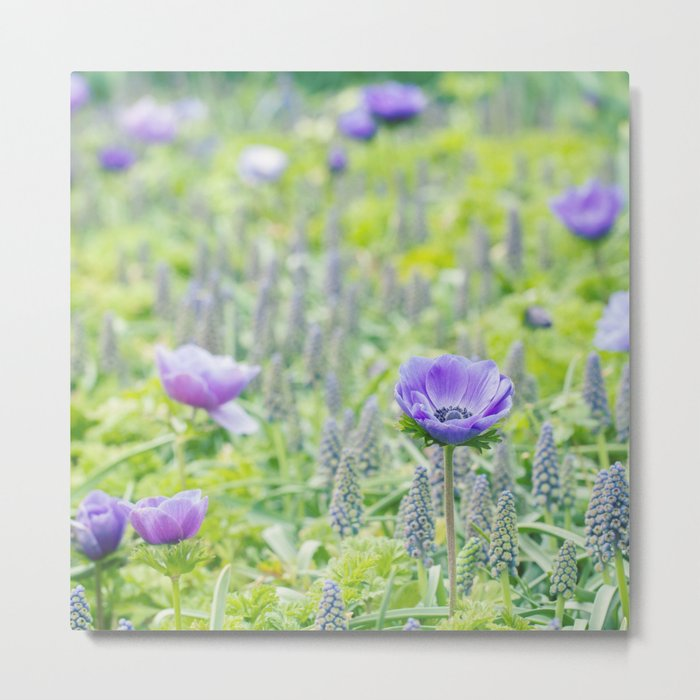 Poppy Anemone Metal Print