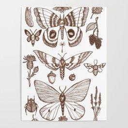 Natural History (Brown) Poster
