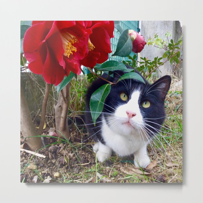 Orazio, the cat of camellias Metal Print