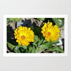 Two Marigolds Art Print